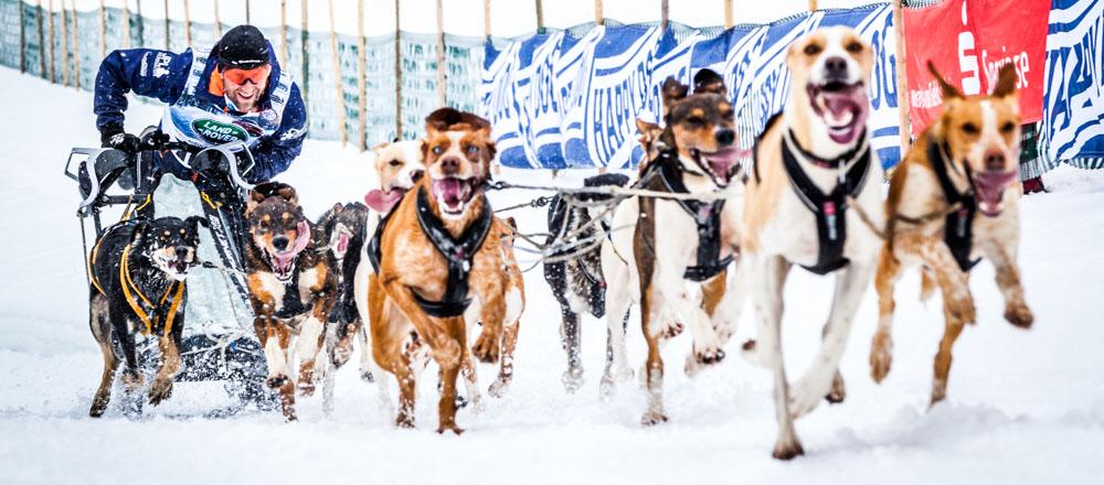 Hundeschlitten WM 2015 in Todmoos