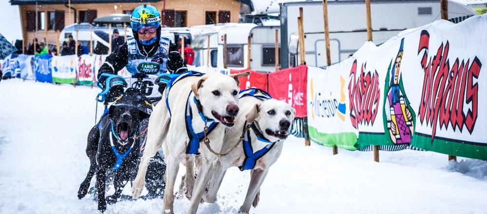 Hundeschlitten WM 2015 in Todtmoos